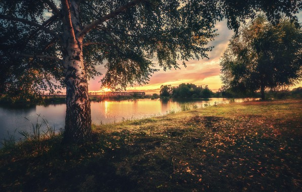 Picture trees, landscape, sunset, nature, river, birch