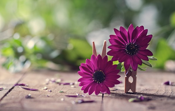 Picture macro, flowers, Board, petals, clothespins