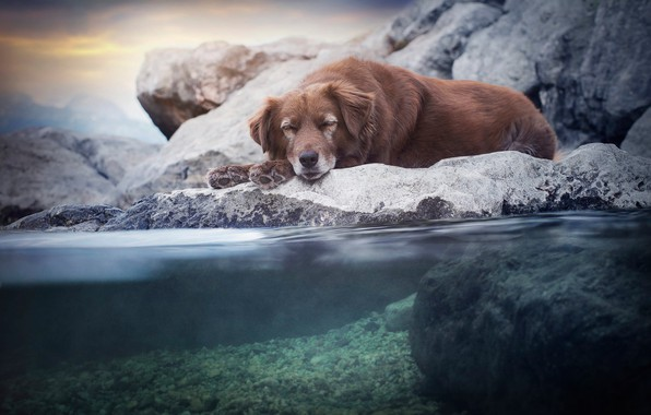 Picture sea, the sky, water, nature, pose, pebbles, stones, rocks, stay, shore, sleep, dog, the bottom, …