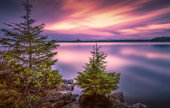 Picture trees, landscape, sunset, nature, lake, stones, USA, national Park, Christmas trees, Acadia National Park, Acadia, …