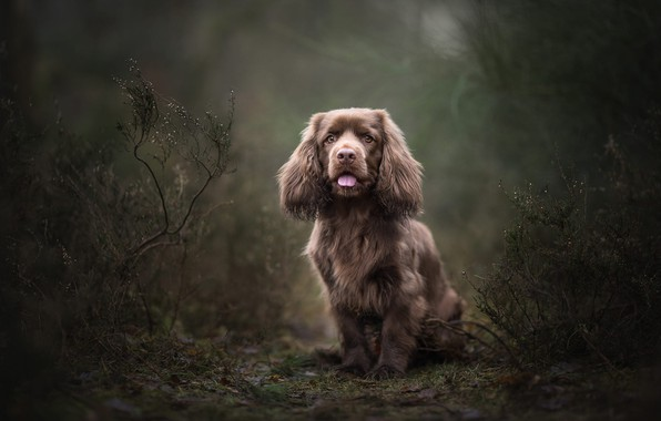 Picture forest, language, look, nature, pose, Park, the dark background, vegetation, dog, baby, puppy, face, sitting, …