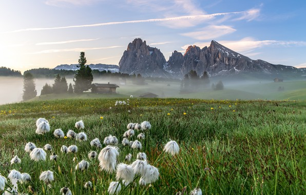 Picture field, mountains, nature, fog, morning