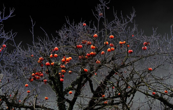 Picture nature, apples, Apple