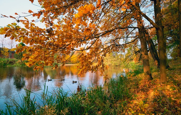 Picture autumn, leaves, trees, pond, Park, colorful, nature, park, autumn, leaves, tree