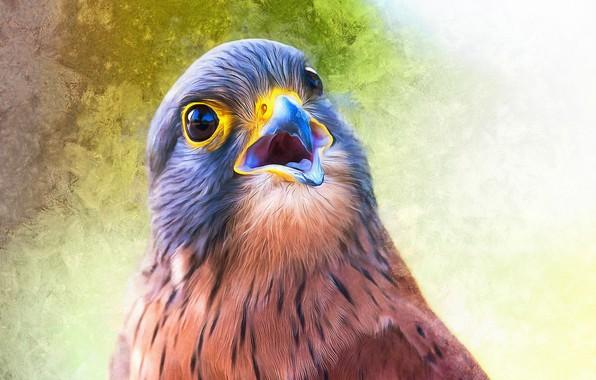 Picture bird, paint, photoshop, painting