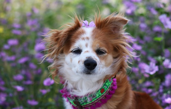 Picture look, flowers, dog, garden, hairstyle, collar, red, face, dog, funny, cute, flower, funny