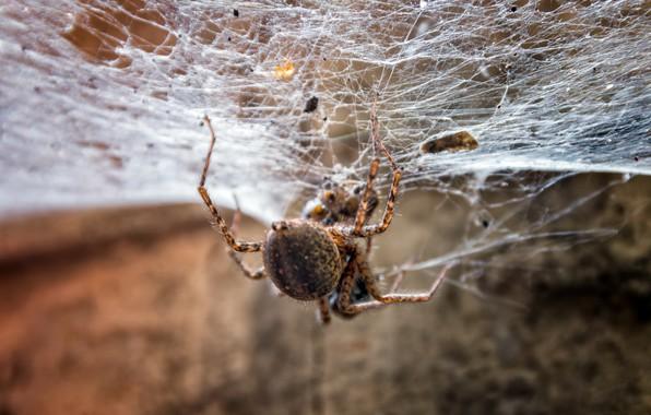 Picture nature, web, spider