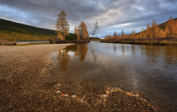 Picture autumn, trees, nature, Kolyma, stream Unknown, Maxim Evdokimov