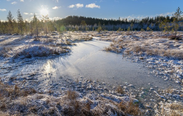 Picture forest, winter, lake, finland, frouzen