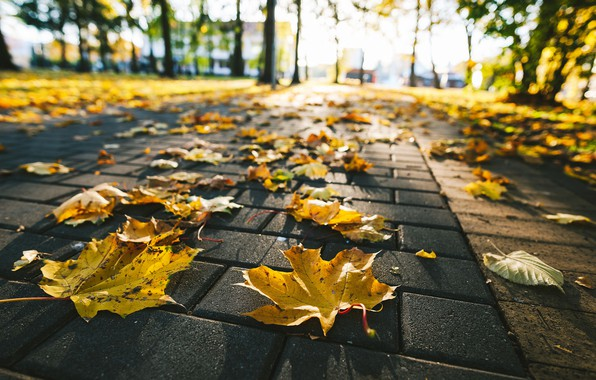 Picture autumn, leaves, street