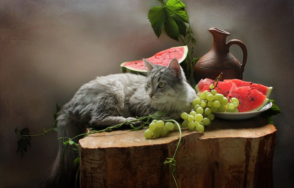 Picture cat, cat, leaves, berries, animal, stump, watermelon, grapes, pitcher, fruit, still life, Kovaleva Svetlana