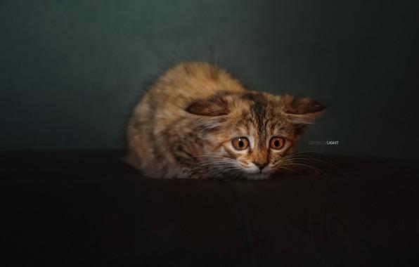 Picture background, kitty, scared, cat, Alexander Drobkov-Light