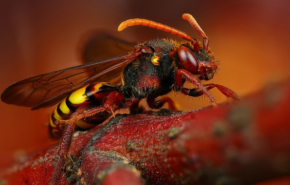 Picture macro, background, branch, insect, hornet