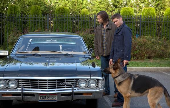 Picture the series, Supernatural, Supernatural, shepherd, Sam, Dean, Jared Padalecki, Jensen Ackles