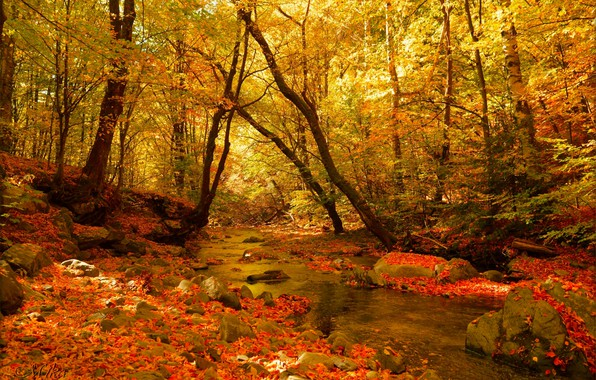 Picture Autumn, Forest, Stream, Fall, Autumn, Colors, Forest