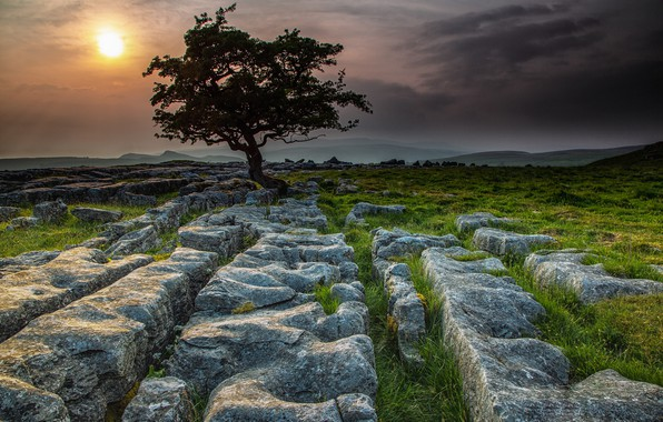 Picture stones, tree, England, Yorkshire Dales