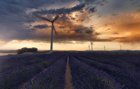 Picture Spain, Navarre, Olite/Olite, Lavender Field