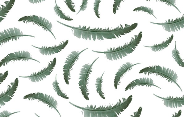 Picture pen, texture, white background, background, pattern, feather