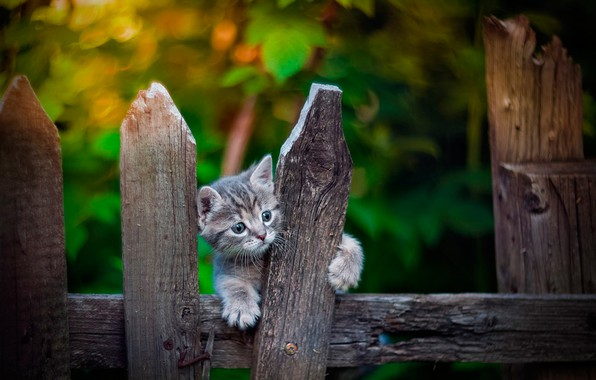 Picture the fence, baby, kitty