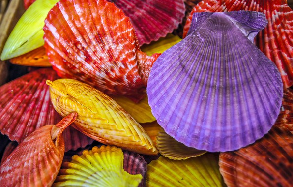 Picture macro, photo, shell