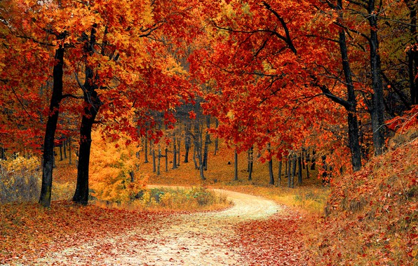 Picture autumn, forest, leaves, trees, Park, forest, landscape, park, autumn, leaves, tree, fall