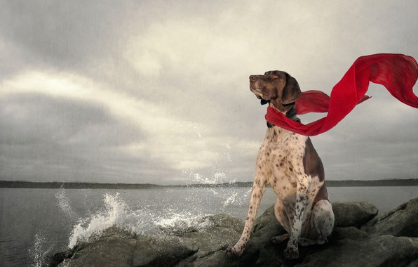 Picture lake, stones, dog, scarf, red scarf