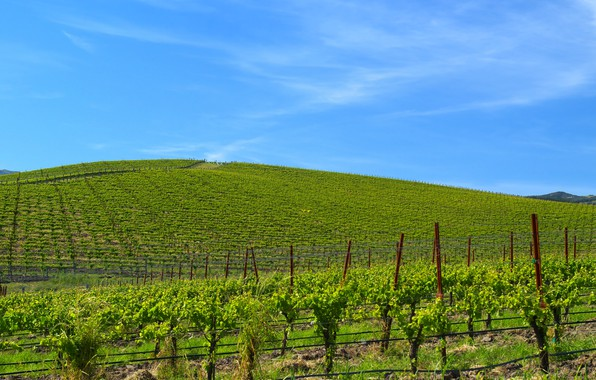 Picture serenity, wallpaper, windows xp, the vineyards, famous Wallpaper