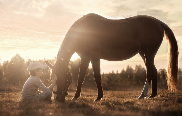 Picture light, horse, boy