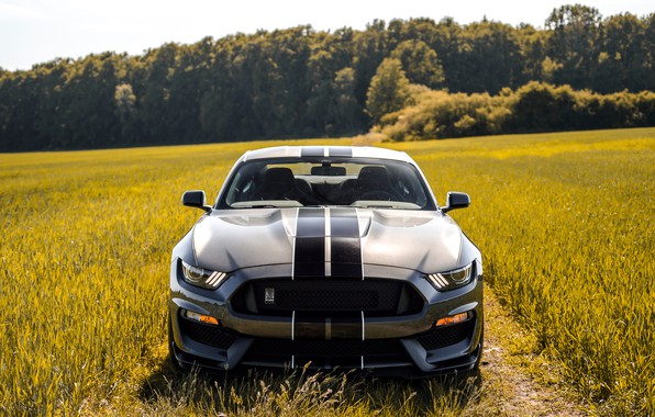 Picture Mustang, Ford, Shelby, Ford, Mustang, GT350, Ford Mustang Shelby GT350