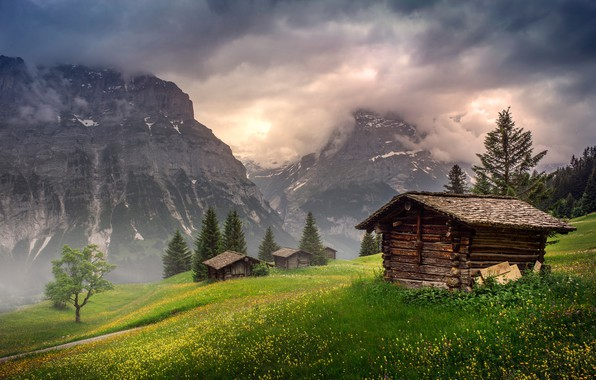 Picture field, forest, summer, the sky, grass, clouds, light, flowers, mountains, nature, fog, tree, rocks, hills, …