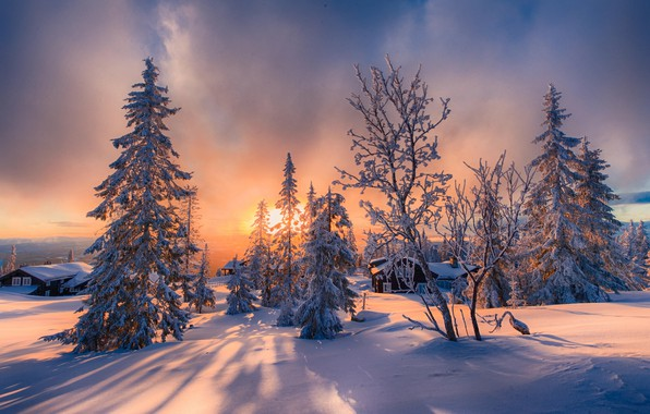 Picture winter, the sun, snow, trees, landscape, nature, home, ate, shadows, tree, Allan Pedersen