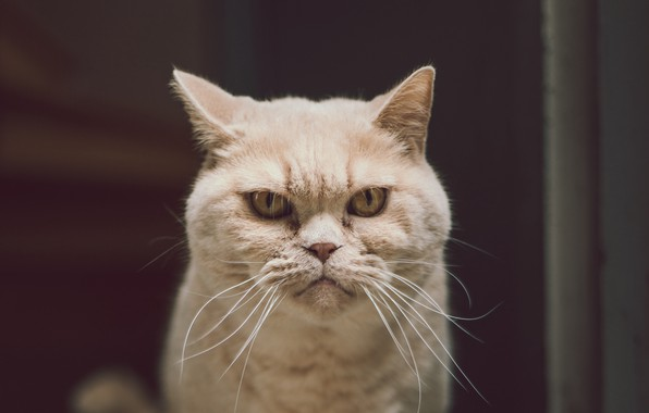 Picture animals, cat, serious, cats, look, funny, pet, glance, stare