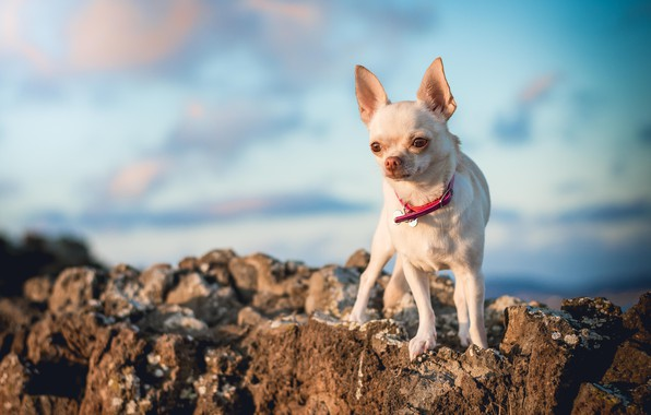 Picture the sky, look, clouds, light, nature, stones, dog, white, collar, is, face, dog, cutie, baby, …
