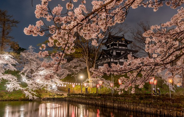Picture trees, branches, nature, the city, pond, Park, spring, the evening, Japan, Sakura, lighting, lights, temple, …