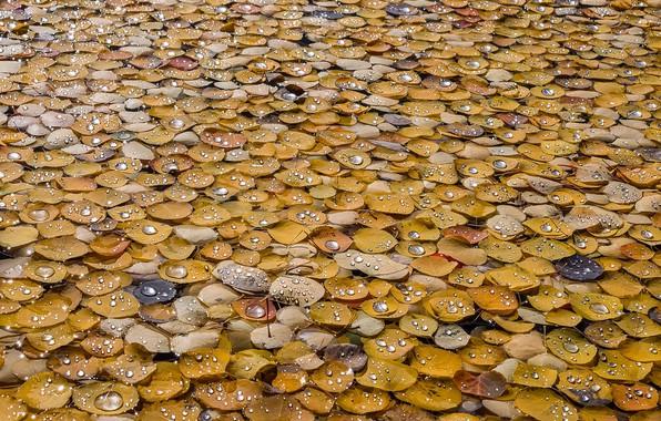 Picture wet, autumn, drops, macro, foliage
