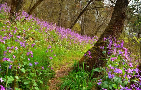 Picture Field, Spring, Spring, Flowering, Field, Purple flowers, Flowering, Purple flowers