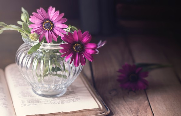 Picture glass, light, flowers, table, background, dark, Board, book, wooden, pink, still life, page, a bunch, …