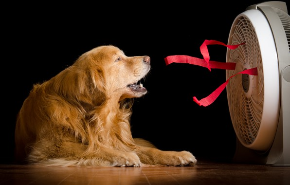 Photo wallpaper house, dog, fan