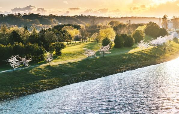 Picture Lithuania, Kaunas, Sakura Blossoms, Naujamiestis situated in the