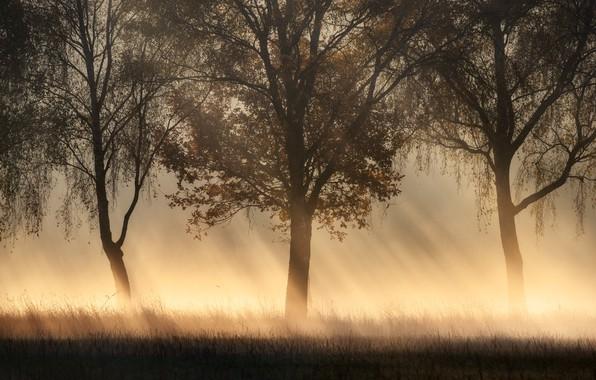 Picture rays, trees, fog, trees, rays, fog, Kai Hornung