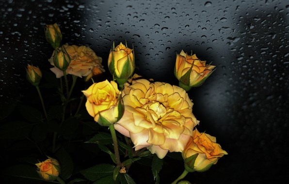 Picture FLOWERS, BEAUTY, THE WALLPAPERS, photo Elena Anikina, YELLOW ROSES