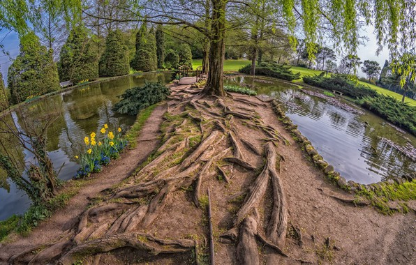 Picture landscape, nature, lake, tree, beauty, logs