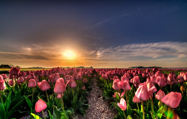 Picture field, the sky, the sun, clouds, light, sunset, flowers, nature, blue, beauty, the evening, horizon, ...