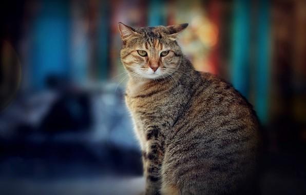 Picture cat, bokeh, cat