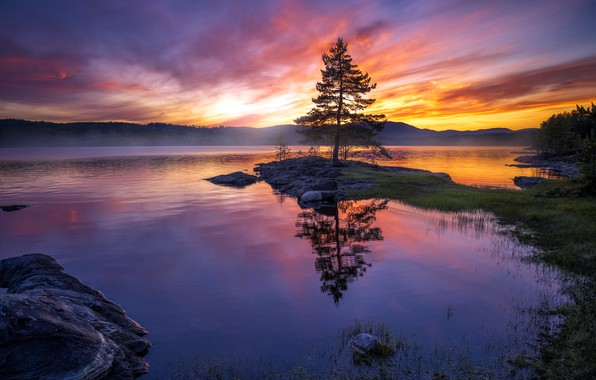 Picture sunset, lake, tree