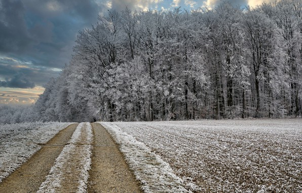Picture winter, road, forest, frost
