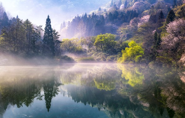 Picture trees, nature, fog, lake, spring, morning, South Korea, South Korea, Jeollanam-do, Jeollanam-do, The Republic of ...