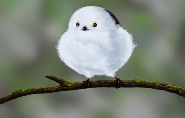 Picture art, bird, picture, children's, Snowball, Nikoleta Jovanovic
