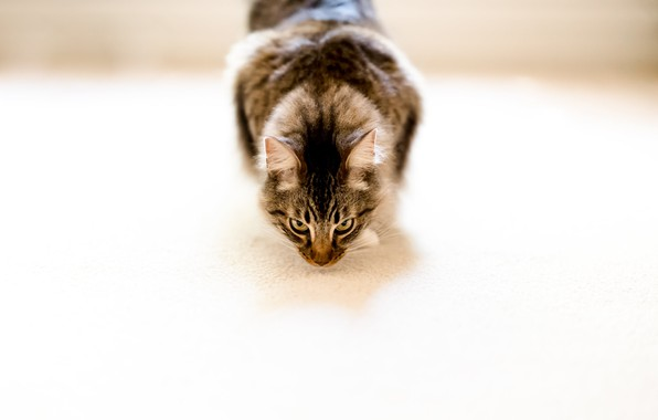 Picture cat, house, background