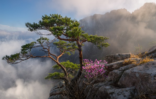 Picture clouds, trees, landscape, mountains, nature, rocks, flowering, South Korea